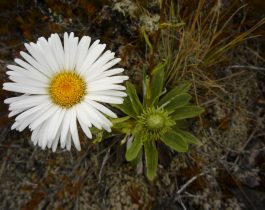 Native plants of Mid Dome